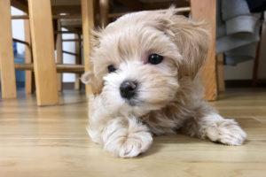 犬を迎えた理由